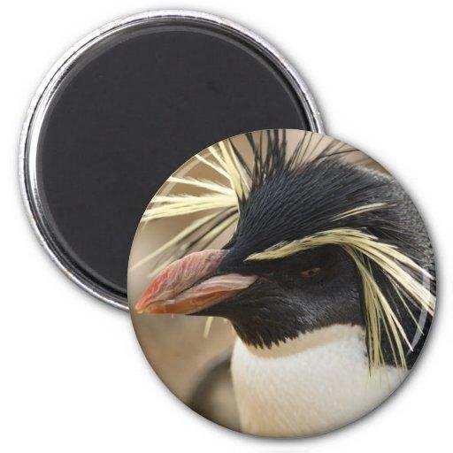 Rockhopper Penguin  Magnet Refrigerator Magnet