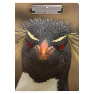 Rockhopper penguin portrait clipboard