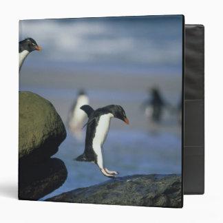 Rockhopper Penguins, Eudyptes chrysocome), Binder