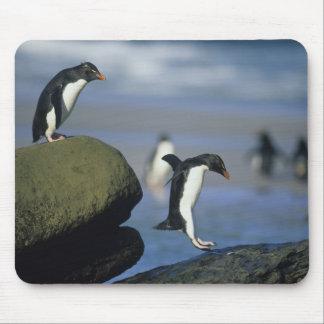 Rockhopper Penguins, Eudyptes chrysocome), Mouse Pad