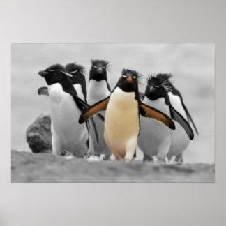 Rockhopper Penguins Poster