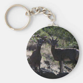 Rocky Mountain Bighorn Sheep Basic Round Button Keychain
