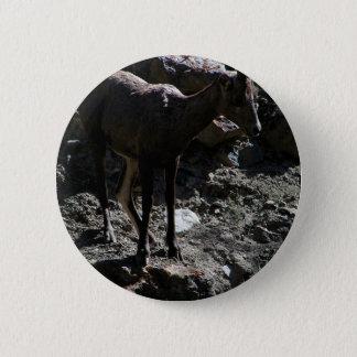 Rocky Mountain Bighorn Sheep, ewe 2 Inch Round Button