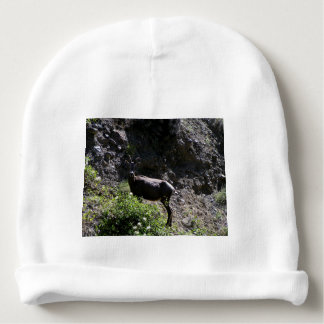 Rocky Mountain Bighorn Sheep, ewe Baby Beanie