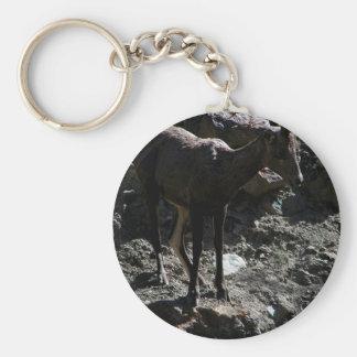Rocky Mountain Bighorn Sheep, ewe Basic Round Button Keychain