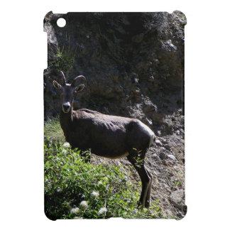 Rocky Mountain Bighorn Sheep, ewe iPad Mini Covers