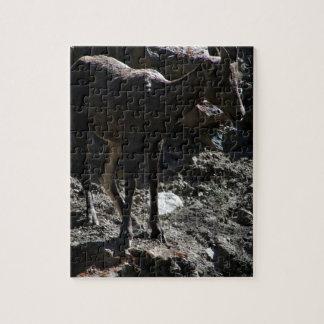 Rocky Mountain Bighorn Sheep, ewe Jigsaw Puzzle