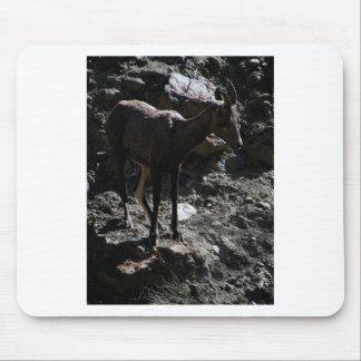 Rocky Mountain Bighorn Sheep, ewe Mouse Pad
