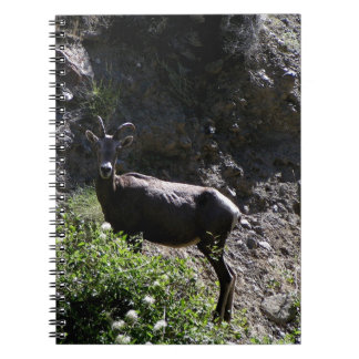Rocky Mountain Bighorn Sheep, ewe Notebook