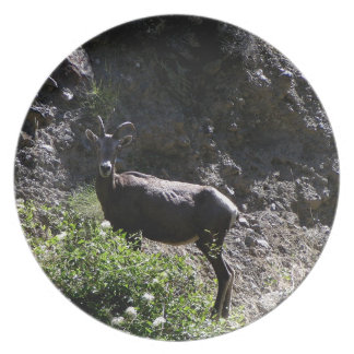 Rocky Mountain Bighorn Sheep, ewe Plate