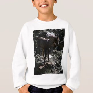 Rocky Mountain Bighorn Sheep, ewe Sweatshirt