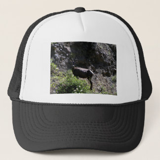 Rocky Mountain Bighorn Sheep, ewe Trucker Hat
