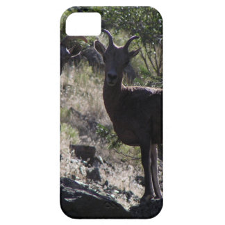 Rocky Mountain Bighorn Sheep iPhone 5 Case