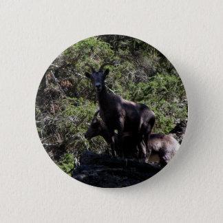 Rocky Mountain Bighorn Sheep, Keremeos, BC 2 Inch Round Button
