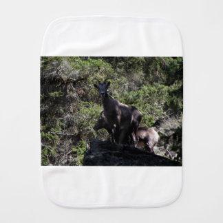 Rocky Mountain Bighorn Sheep, Keremeos, BC Burp Cloth