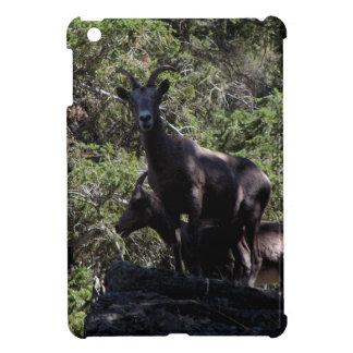 Rocky Mountain Bighorn Sheep, Keremeos, BC iPad Mini Covers