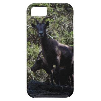 Rocky Mountain Bighorn Sheep, Keremeos, BC iPhone 5 Cover