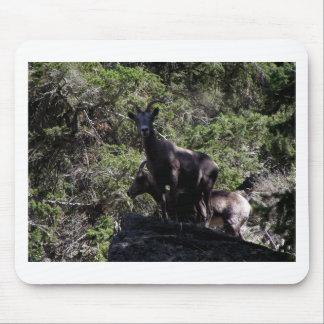 Rocky Mountain Bighorn Sheep, Keremeos, BC Mouse Pad