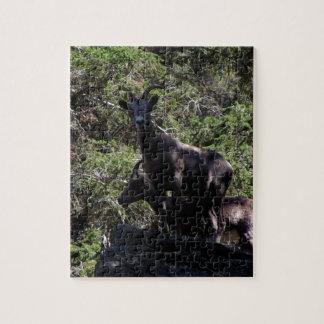Rocky Mountain Bighorn Sheep, Keremeos, BC Puzzle