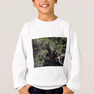 Rocky Mountain Bighorn Sheep, Keremeos, BC Sweatshirt