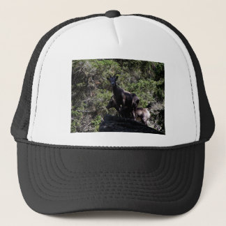 Rocky Mountain Bighorn Sheep, Keremeos, BC Trucker Hat