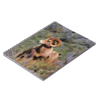 Rocky Mountain Bighorn Sheep Notebooks