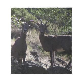 Rocky Mountain Bighorn Sheep Notepad
