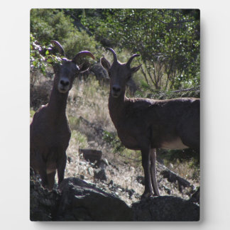 Rocky Mountain Bighorn Sheep Plaque