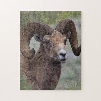 Rocky Mountain Bighorn Sheep Ram 1 Jigsaw Puzzle
