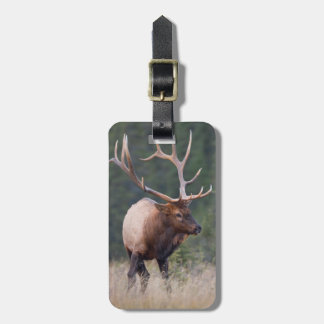 Rocky Mountain Elk Tag For Luggage