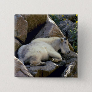 Rocky Mountain goat, Colorado 2 Inch Square Button