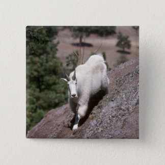 Rocky mountain goat (Male following game trail) 2 Inch Square Button