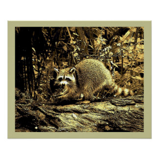 ROCKY RACCOON SITTING ON A TREE POSTER