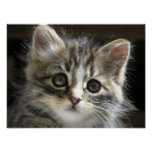 Rocky the Kitten Poster 2