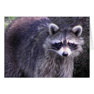 Rocky the Raccoon Card