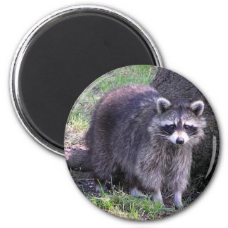 Rocky the Raccoon Magnet