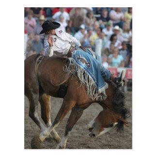 Rodeo Bucking Bronco Postcard