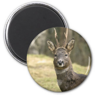 Roe Deer Buck Magnet