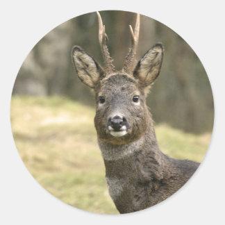 Roe Deer Buck Stickers