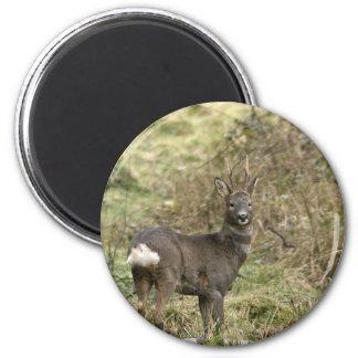 Roe Deer on the Moors Magnet