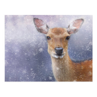roe-deer postcard
