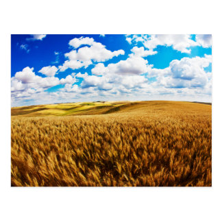 Rolling hills of ripe wheat postcard