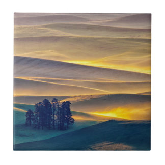 Rolling Hills of Wheat at Sunrise | WA Tile