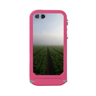 Romaine lettuce field foggy morning photo case