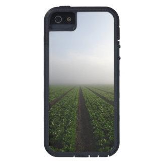 Romaine lettuce field foggy morning photo case