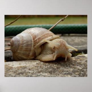 Roman Snail Poster