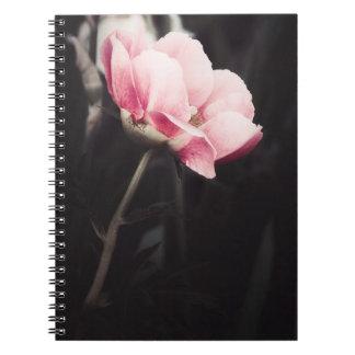 Romancing Pink Notebooks