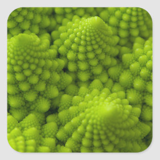 Romanesco Broccoli Fractal Vegetable Square Sticker