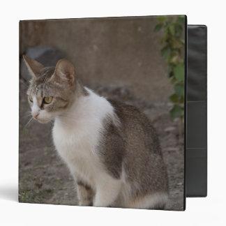 Romania, Transylvania, Sighisoara. Pet cat. Binder