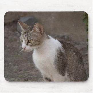 Romania, Transylvania, Sighisoara. Pet cat. Mouse Pad